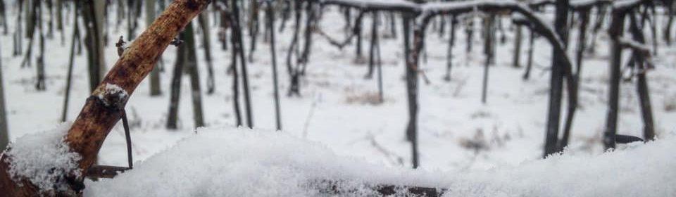 Gáspárpince télen